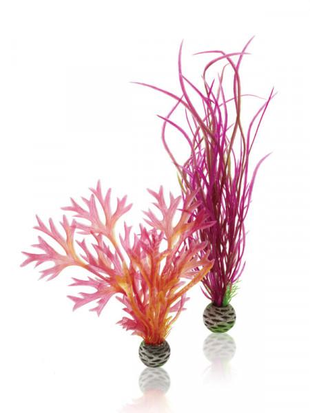 biOrb Pflanzen-Set mittelgroß rot & pink