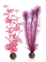 seetang-set-pink-gr-1