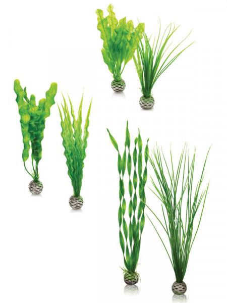 biOrb Pflanzen-Set grün