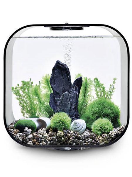 biOrb Decor Set Stone Garden als Beispiel