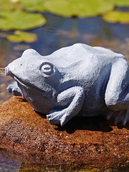 Wasserspeier Frosch seitlich