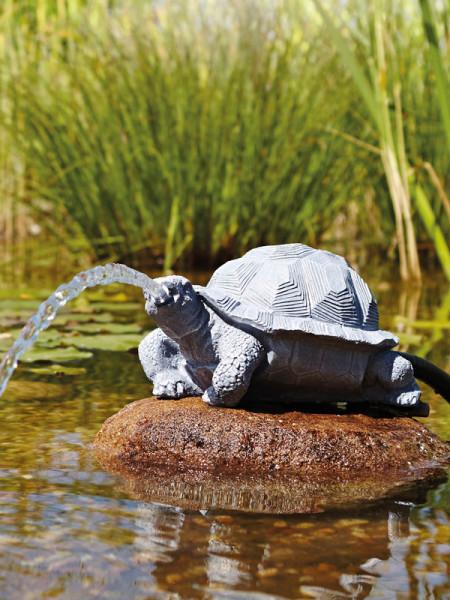 Wasserspeier Schildkröte