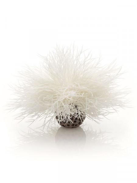 biOrb Aquarien-Seelilie weiß
