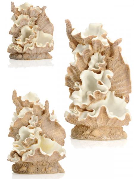 biOrb Muschel-Ornamente