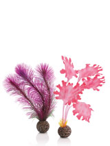 seetang-set-pink-kl-1