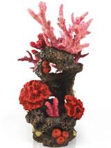 korallenriff-rot-1