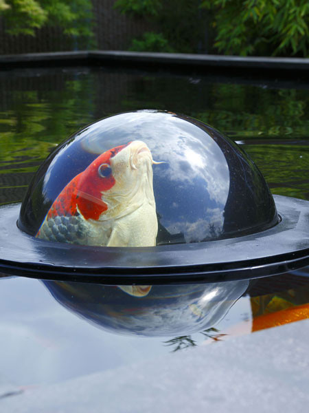 Floating Fish Sphere M von Velda (Art.Nr. Vel123503)